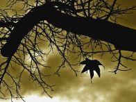 last-leaf